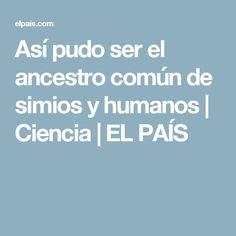 Así pudo ser el ancestro común de simios y humanos   Ciencia   EL PAÍS