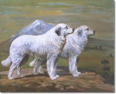Edwin Megargee - Great White Pyrenees #3 By Edwin Megargee Archival Fine Art Paper Print