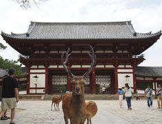 Nara - Pesquisa Google