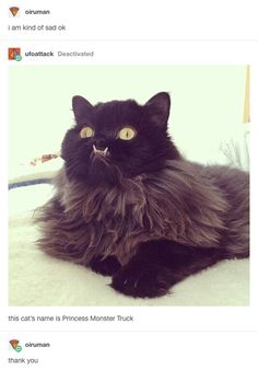 An actual representation of me as a cat