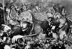 13 janvier 1944. Un Marine bien camouflé donne des instructions silencieuses à un chien de la marine, sur le front de Bougainville. Les chiens se révélèrent inégalable dans l'art de dénicher les tireurs japonais