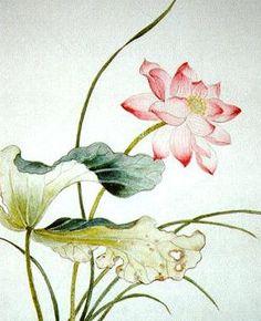 Pretty lotus flower...