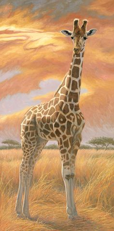 Browse through images in Lucie Bilodeau's Other African Wildlife collection. Paintings of African wildlife and African landscapes by Lucie Bilodeau. Wildlife Paintings, Wildlife Art, Animal Paintings, Animal Drawings, Giraffe Decor, Giraffe Art, Baby Giraffes, Giraffe Colors, Giraffe Drawing