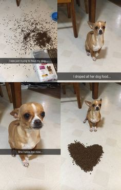 When it gave us this very important dog saga. | 19 Times Snapchat Was A Gift To 2016 Funniest Snapchats, Animal Humour, Funny Animal Memes, Funny Animals, Cute Animals, Baby Animals, Funny Dogs, Cute Dogs, Animal Pics