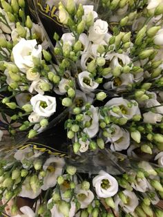 Lisianthus 'Piccolo White'...Sold in bunches of 10 stems from the Flowermonger the wholesale floral home delivery service.