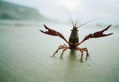 crayfish <3