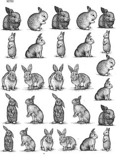 Vintage Animal Rabbits – Ceramic Decals- Enamel Decal – Fusible Decal – Glass Fusing Decal ~ Waterslide Decal – 93755 – diy home crafts Animal Sketches, Animal Drawings, Art Drawings, Bunny Tattoos, Rabbit Tattoos, Hase Tattoos, Lapin Art, Bunny Art, Easter Crafts