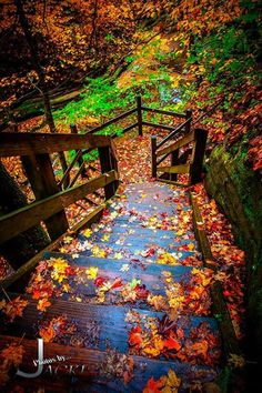 Starved Rock State Park IL Colored Stairs - Photos by Jacki - all Rights Reserved. The simplicity of fallen leaves is pure beauty.