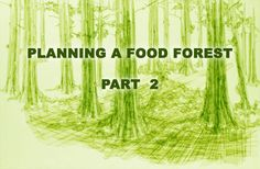 Permaculture Tip of the Day - Planning a Food Forest - Part 2 - School of Permaculture