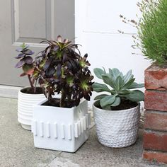 10 Reasons You Need Some Indoor Plants | Apartments.com