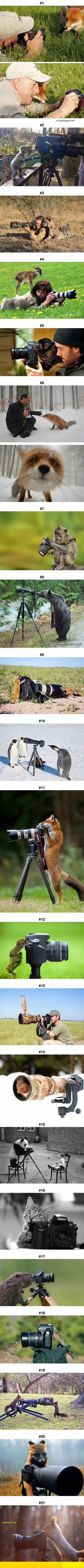 Animals that wants to be photographers
