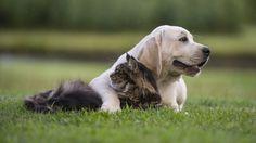 Pet Supplies, Dogs & Cats Supplies, Reptiles, Birds, Fish | Buddy's Pet Shop
