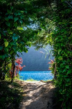 Lagunas de Montebello National Park in Mexico. It's like talking a walk to paradise.