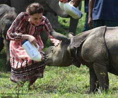 Catherine, Duchess of Cambridge feeds a baby rhino as she visits the Mark Shand Foundation in Kaziranga National Park on day 4 of the royal visit to India and Bhutan on April 13, 2016 in Kaziranga, India.