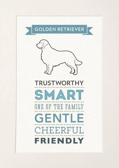 Golden Retriever Dog Breed Traits Print