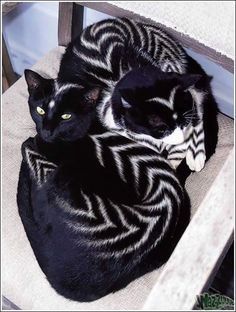 Creative Grooming Design Ideas for Stylish Furry Pets cats with unusual patterns, stripes, creative pet grooming ideas Cute Baby Animals, Animals And Pets, Funny Animals, Beautiful Cats, Animals Beautiful, Beautiful Pictures, Creative Grooming, Unusual Animals, Unusual Pets