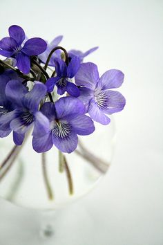 Violets ~  mom's favorite... we would pick these in our yard in the Spring and give them to her.  Simple things....   <3