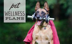 Pet Insurance For Dogs, Pet Health Insurance, Puppy Care, Dog Care, Sad Dog Stories, Animal Technician, Wellness Plan, Kitten Care