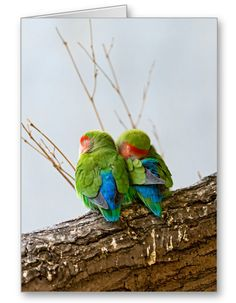 A Lovebird Couple On A Branch Greeting Card.