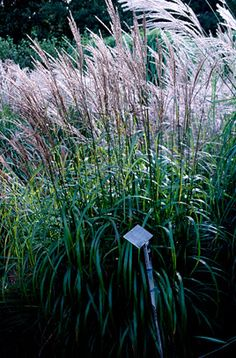 See our top 10 autumn ornamental grasses for the garden rhs find this pin and more on planter jeg har lyst p workwithnaturefo