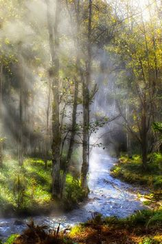 "Beautiful Pictures on ""Fog & sunlight. Photo by Miki Asai. All Nature, Amazing Nature, Nature Water, Nature Tree, Beautiful World, Beautiful Places, Landscape Photography, Nature Photography, Nature Pictures"