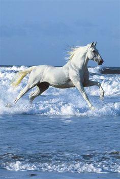 Caballo blanco cabalgando en la mar.                                                                                                                                                                                 Más