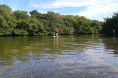 Paddle boarding in the mangroves near Islamorada