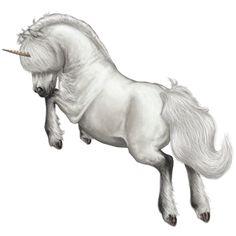 Unicorn Newfoundland Pony Dapple Gray