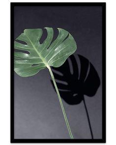 Posterhouse.no: Sunny Monstera  Plakat som finnes i fire ulike størrelser. Fantastisk, supermatt fotopapir!  #plakater #posters Poster S, Plant Leaves, Plants, Nature, Pictures, Flora, Plant, Planting