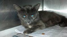 (13) URGENT CATS