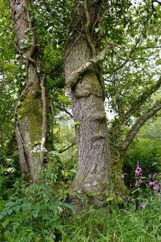 The Face Tree