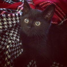 lovely black kitty