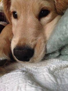 AM puppy snuggles <3