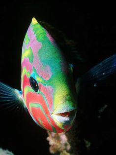 ¿Sabes cuántos tipos de peces existen? Te lo contamos en el blog de Aquaservice: http://www.aquaservice.com/informacion/sabes-cuantos-tipos-de-peces-existen/