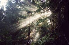 The woods... twilight