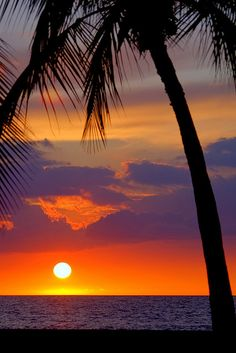 Hawaiian Colorful Sunset with Palm