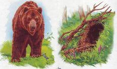 Free Activities For Kids, Animal Activities, Autumn Activities, Infant Activities, Forest Theme, Winter Crafts For Kids, Autumn Forest, Small Art, Forest Animals