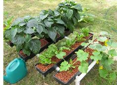 DIY Hydroponics - a whole website for everything to do with hydroponics