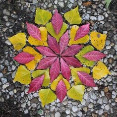 IDEA: Create a mandala with painted paper, leaf templates, and a white gel or paint pen for veins. Land Art, Flower Mandala, Mandala Art, Leaf Crafts, Nature Artwork, Pressed Flower Art, Arte Floral, Environmental Art, Nature Crafts