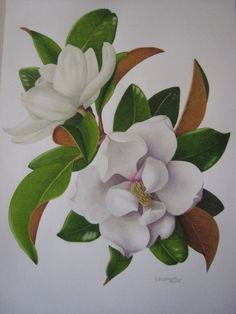 """Using Color Pencils in Botanical Art"" on 1/12/13  http://www.arboretum.org/index.php/events-and-classes/details/using_colored_pencils_in_botanical_art/?start_time=1358013600_time=  #art  #mustloveart #botanicalart"