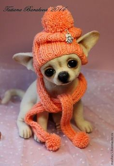 Effective Potty Training Chihuahua Consistency Is Key Ideas. Brilliant Potty Training Chihuahua Consistency Is Key Ideas. Cute Chihuahua, Chihuahua Puppies, Teacup Chihuahua, Cute Puppies, Cute Dogs, Chihuahuas, Needle Felted Animals, Felt Animals, Cute Baby Animals