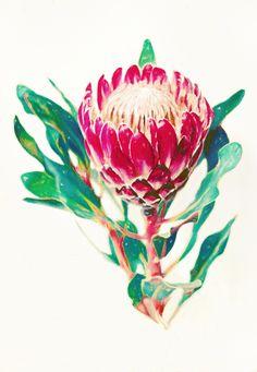 Vintage Protea (For Sale)
