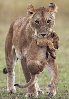Masai mara. Too cute. I was in the Mara in 2002. Would like to take my husband there.