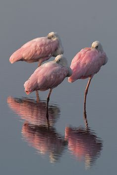 pink flamingo trio <3