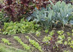 Quels légumes planter dans un mini potager ? - Les vivaces
