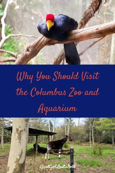 Next time you visit Columbus, Ohio, make sure that you visit the Columbus Zoo and Aquarium. See all of the unique species that live there and learn more about conservation as you walk the paths through each region of the zoo. Us Travel Destinations, Family Vacation Destinations, Places To Travel, Family Vacations, Zoos In Ohio, Polar Bears International, Columbus Zoo, Quiet Girl, Asian Elephant