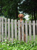 Fence Ideas for Dog Owners