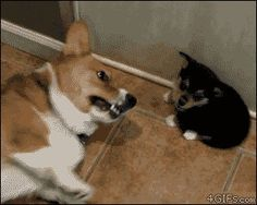 The Best Defense Is A Good Puppy Fart
