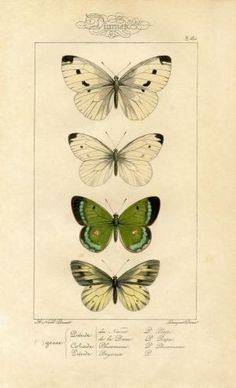 Natural History Printable Image – Moths – Butterflies - The Graphics Fairy by madelinem