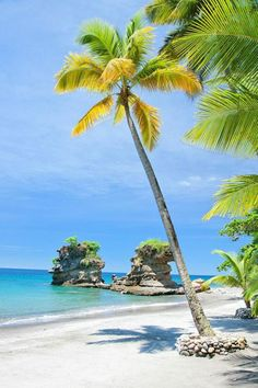 Travel destinations Beautiful places Adventure travel Travel photography Places to travel Travel inspiration Anse Mamin Beach at Anse Chastanet and Jade Mountain Resorts Saint Lucia Caribbean Top 10 Honeymoon Destinations, Best Honeymoon, Travel Destinations, Beautiful Islands, Beautiful Beaches, Trees Beautiful, Dream Vacations, Vacation Spots, Romantic Vacations